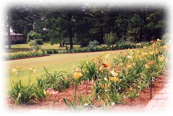 a picture of the daylily display beds at Hem Haven Daylily Nursery located in Fairhope, Alabama.